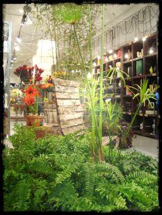 Esta tienda me parece una selva llena de plantas. Macarena Accions febrero 2011