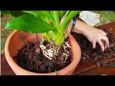 Cultivo de Orquídea - Plantio de Orquídea - Cursos CPT - YouTube