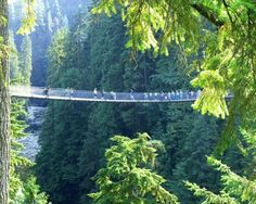 Lynn Valley suspension bridge, North Vancouver, Canada. Better than Capilano by far! Also, less people.