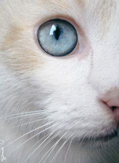 Blue-eyed white kitty with orange markings