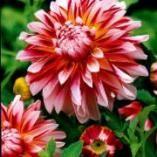 Blumenzwiebeln pflanzen , für den garten, tulpen, lilien, blumenzwiebel,