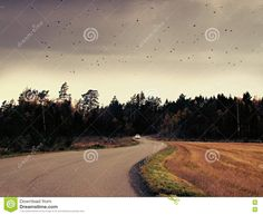 Photo about car driving out of forest. Image of lanscape, forest, wallpaper - 79616683 Forest Wallpaper, Country Roads, Stock Photos, Bird, Image, Birds