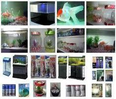 Aquariums are becoming famous in Homes, offices, Factories, Restaurants, Resorts, Hotels, Schools, Doctors' and many other professional establishments as part of their adornment.