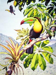 Purchase Bird Art | albertearlgilbert. albertearlgilbert.com