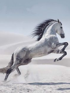Printed with fade-resistant ink on tempered glass, the White Stallion Photography Glass Wall Art captures a gorgeous grey horse in a majestic stride. This breathtaking piece will make a bold statement in any room of your home. Pretty Horses, Horse Love, Beautiful Horses, Animals Beautiful, Gray Horse, Silver Horse, Animals And Pets, Cute Animals, Funny Animals