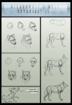 Drawing Wolf Step By Step Deviantart 29 Ideas Animal Sketches, Animal Drawings, Art Drawings, Drawing Animals, Wolf Sketch, Nature Sketch, Drawing Techniques, Drawing People, Art Tutorials