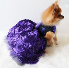 Visit us at www.facebook.com/... The Classy Dog is a ...