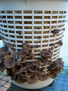 Growing mushrooms in a laundry basket- might be missing some great flavor