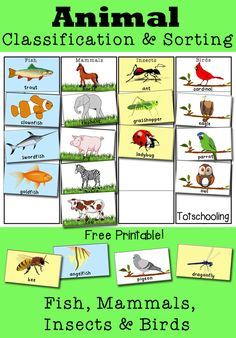 This activity helps children begin to classify animals into different categories. They will place the animals in the correct column based on the animals specific attributes. Standard: PreK-LS1-1(MA). Compare, using descriptions and drawings, the external body parts of animals (including humans) and plants and explain functions of some of the observable body parts