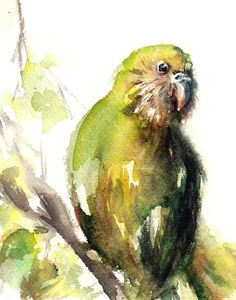 Shop for art on Etsy, the place to express your creativity through the buying and selling of handmade and vintage goods. Budgies, Parrots, Kakapo Parrot, Nz Art, Watercolour Art, Bird Illustration, Bird Drawings, Typography Prints, Bird Art