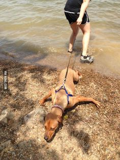 I feel like this dog does not like the water.