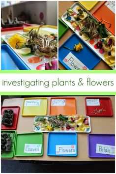 This project and center came about when we were studying plants, flowers, and sequencing. You can see that our sunflowers had begun sprout...