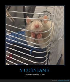 Y cuéntame, ¿qué tal ha estado tu día? (mandatos informales + pronombre, presente perfecto). Great for a warm-up the day after learning present perfect. Students can answer the question! Visit http://estudiafeliz.com for more fun materials for Spanish teachers and students!