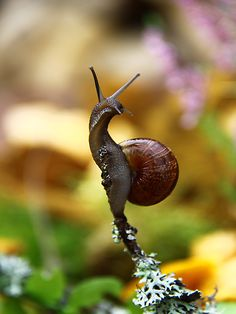 Snail by Juris