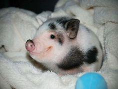 20 Animales hermosos de bebes - Taringa!