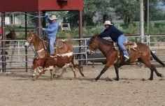 team roping | PairADice Mules: JackPot Team Roping