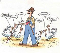 Thanksgiving Funny Turkeys Images Free | Funny Collection The Best Thanksgiving Jokes Burst - funny turkey ...