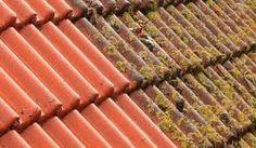 Anti-Mos behandeling!  Ideaal voor daken en gevelbeplating. Wij gebruiken een milieuvriendelijk Anti-Mos product die algen, mossen, schimmels en groene aanslag verwijdert zonder schrobben of hoge druk.