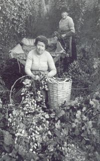 The history of hop growing, hop picking and the processing of hops grown in Bromyard and the Frome Valley. Kent London, London Now, Gypsy People, White Tractor, National Health Service, Herefordshire, Old Barns, Coventry, Old Pictures