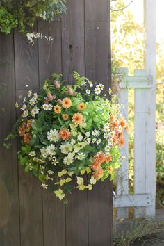 この植物をお買い2 Hanging Wall Baskets, Hanging Flower Baskets, Green Flowers, Pretty Flowers, Hanging Flower Arrangements, What To Plant When, Church Flowers, Container Flowers, Garden Crafts