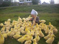 A young girl on a diplomatic mission to the ducklings.