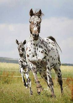 Mare and foal... ❤ wonderful!
