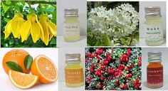 essential oil pure lot fragrance aroma burner by candoall Essential Oil Set, 100 Pure, Fragrance, Essentials, Pure Products, Orange, Perfume