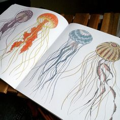 Coloured In The Jelly Fish From Animal Kingdom Colouring Book