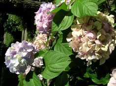 Exotic flowers are in an abundance - Portofino, Italia