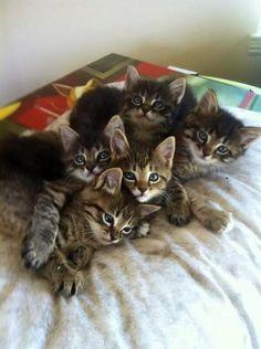 カワイイ猫画像