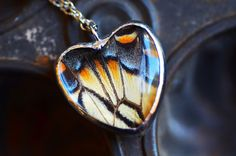 Real Butterfly Wing Necklace Papilio glaucus Tiger Swallowtail Heart Glass Jewel