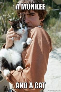 A Monkee and a cat