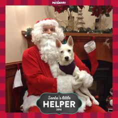 Here's my Pet Photo of Storm with Santa