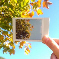 Blue skies in winter time are the best thing! instant photography film instax polaroid