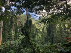 Kommt mit auf eine Reise zu der vermutlich vielfältigsten Insel von Hawaii Oahu, Hawaii, Water, Plants, Outdoor, North America, Island, Places To Travel, Travel