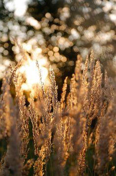 Grasses sun landscape, 17 selected beautiful landscapes