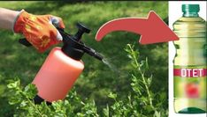 Iata cum poti folosi otetul in gradina - dr. Fire Extinguisher, Felicia, Spray Bottle, Outdoor Power Equipment, Cleaning Supplies, Floral, Flowers, Gardening, Cottages