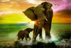 Superb Female Elephant Splashing in the Water During a Glorious Sunset and Her Baby Lovingly Standing at Her Side.