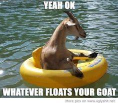 HAHA.. I love goats!! #funny #humor #animals