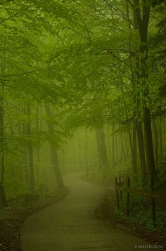Forest path in Neuschwanstein Castle surroundings, Germany. This would scare me to death but still..