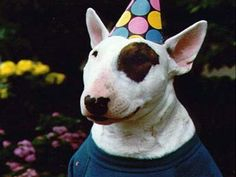 spuds mackenzie | Spuds MacKenzie was a fictional dog character created for use in an ...