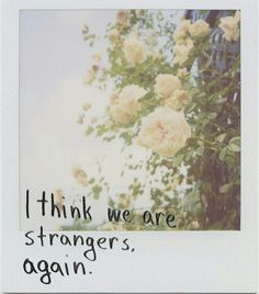 Is this really a polaroid? Photo Polaroid, Polaroid Pictures, Polaroids, Polaroid Film, Pretty Words, Beautiful Words, All The Bright Places, Colorful Roses, Film Photography
