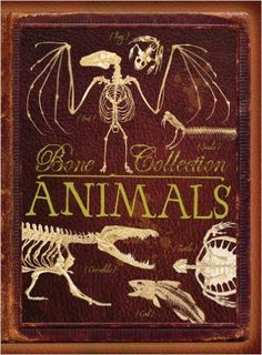 From fruit bats to kangaroos and lions, see some of the world's most incredible creatures as you have never seen them before! This amazing book features a fantastic selection of skeletons and fun fact
