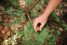 Natur, Sein, Genuss, Schönheit, Wald, Waldbaden, Fruit, Forests, Nature