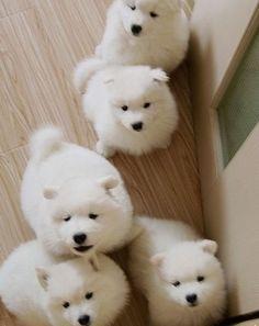 dog world xxx flohmarkt plz 7