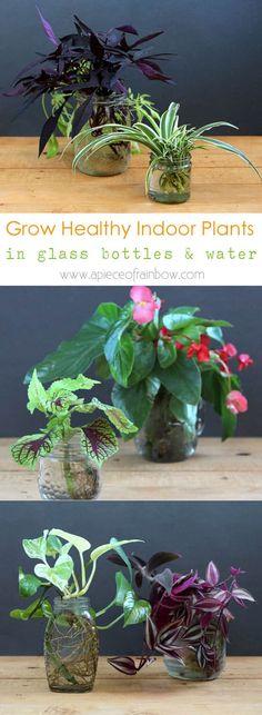 grow-indoor-plants-in-glass-bottles-apieceofrainbow (3) - begonia, spider plant, wandering jew, pothos, sweet potato vine, coleus