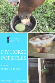 Help your horse chill out this summer with refreshing homemade horse-friendly popsicles. They're cheap and easy to make, plus they can be hung up for horses that like to play with their food. Toys For Horses, Treats For Horses, Diy Horse Toys, Horse Crafts, Homemade Horse Treats, Horse Care Tips, Horse Camp, Horse Supplies, Equestrian Outfits