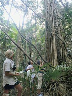 Tree Arch, Eungella NP