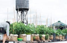 Farm-in-the-Sky