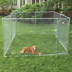 good idea for a crazy dog {like mine} to go outside and do her business !